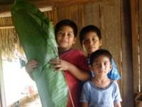 gathering the waha leaf